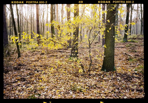 Wald5